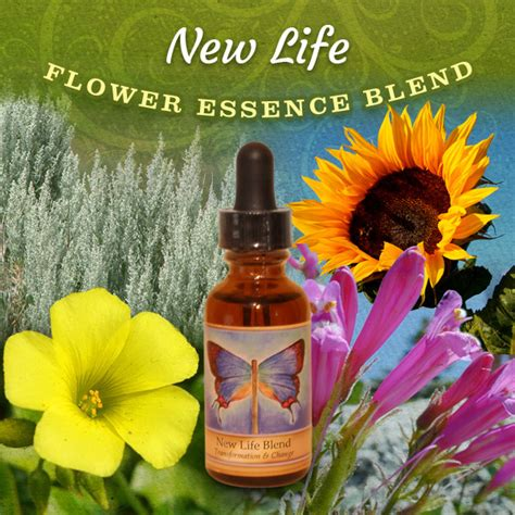 New Life Flower Essence Blend | The Power of Flowers ...