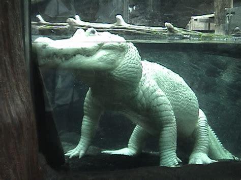 New Orleans Aquarium of the Americas | ZooChat