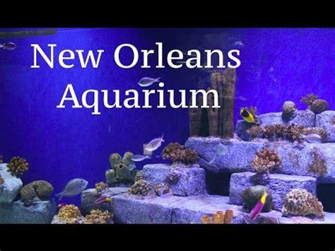 New Orleans Aquarium   YouTube