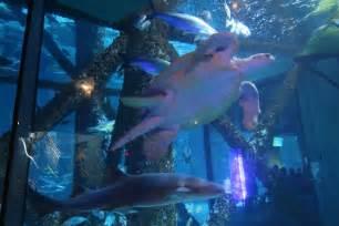 New Orleans Audubon Aquarium is a Great Indoor Activity ...