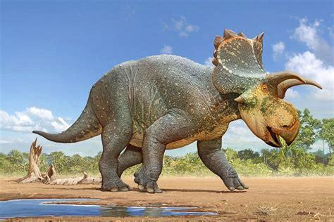New Species of Horned Dinosaur Named for Tucson  Citizen ...