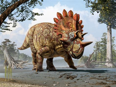 New species of horned dinosaur with  bizarre  features ...