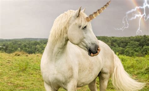 Newly Discovered Fossil Shows Unicorns Were Real