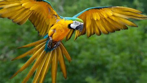 Nicaragua tiene gran variedad de aves migratorias y ...
