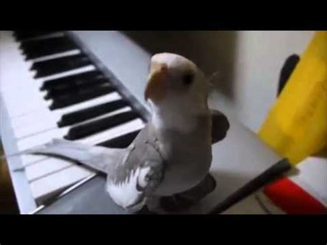 Ninfa cantando al piano que mono   YouTube