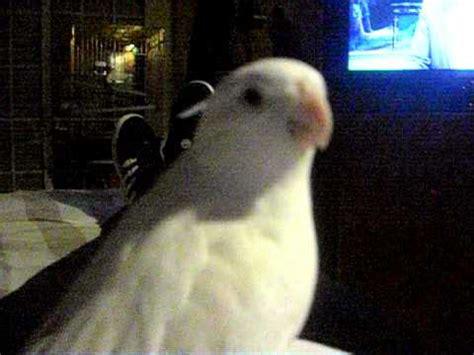 ninfa hablando  pollo2  | Doovi
