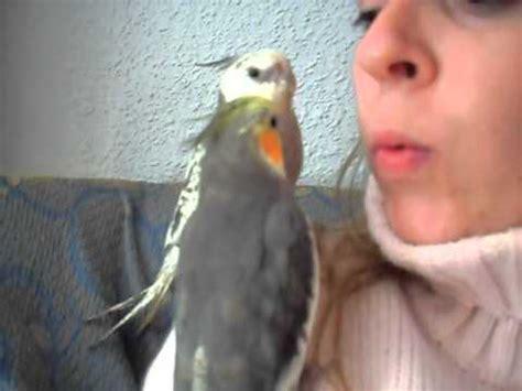 ninfa papillera,blancanieves cantando,bobesponja con ...