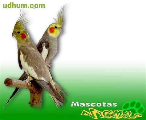 Ninfas Aves Precios   SEONegativo.com