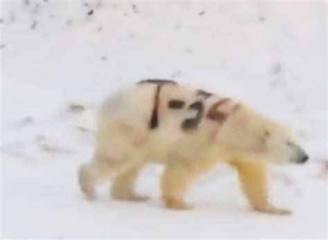No joke: Russian scientists marked problem Kara Sea polar ...