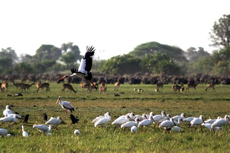 No More Hunting of Any Kind in Botswana… – National ...