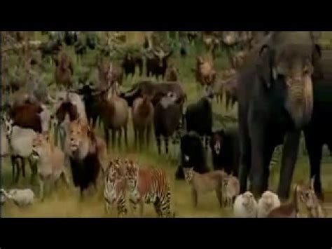 Noah s Ark Animals   YouTube