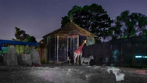 Noches de Luna en el Zoológico La Aurora 2017 en la Ciudad ...