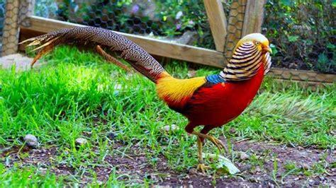 Nombre de aves exóticas del mundo y sus características ...
