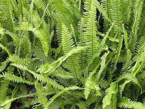 nombre de plantas verdes | Cuidar de tus plantas es ...