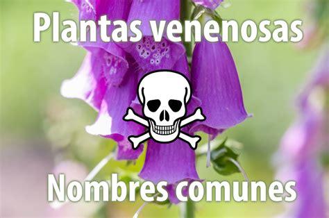 Nombres comunes de plantas venenosas   Plantas venenosas