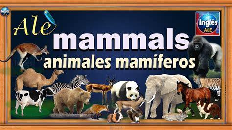 Nombres de Animales en Ingles y Español   Mammal Animal ...
