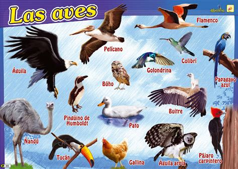 Nombres De Aves En Espanol   SEONegativo.com