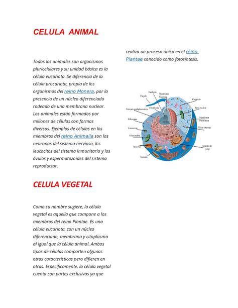 Nombres De Las Partes De La Celula Animal Y Vegetal ...