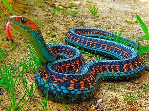 Nombres de Reptiles: Ejemplos de serpientes