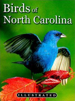 North Carolina s Illustrated Birds by Tim Ohr ...