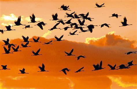 NOTICIAS DE LERÍN: La migración otoñal de las aves que ...