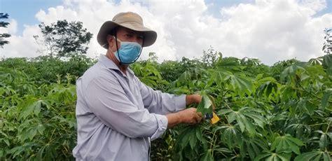 Noticias   Ministerio de Agricultura de la República ...