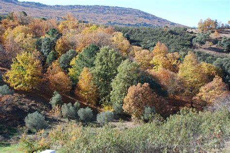 Noticias sobre el Parque Nacional de Cabañeros: Otoño 2020 ...