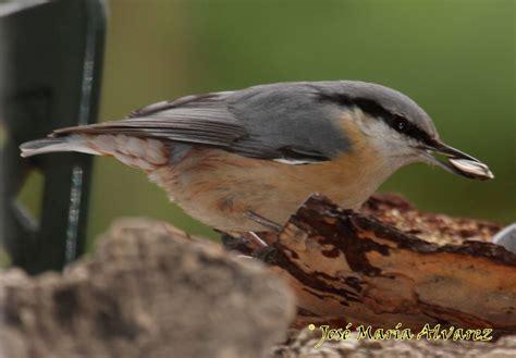 Nuestras aves insectívoras invernantes