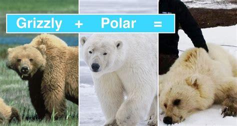 Nuevas especies de animales han surgido como consecuencia ...