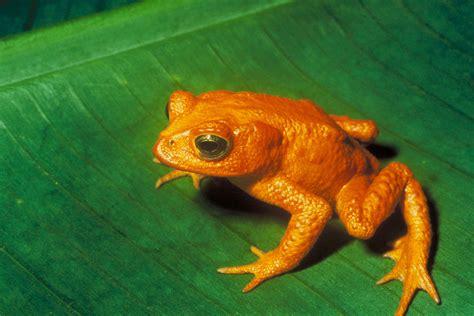 Nuevos datos de la Lista Roja de las Especies Amenazadas ...