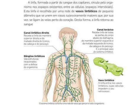 O sistema linfático