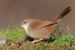 Observa y respeta las aves insectivoras de nuestra comarca ...