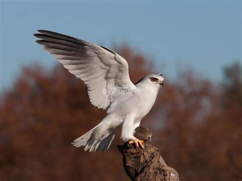 Observación de aves rapaces en Cabañeros 8 h   Ofertas ...
