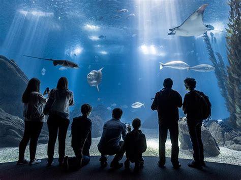 Oceanário de Lisboa named world s best aquarium » News ...