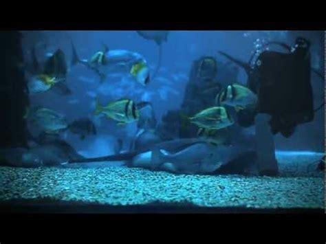 Oceanário de Lisboa,  O aquário é para todos.    YouTube