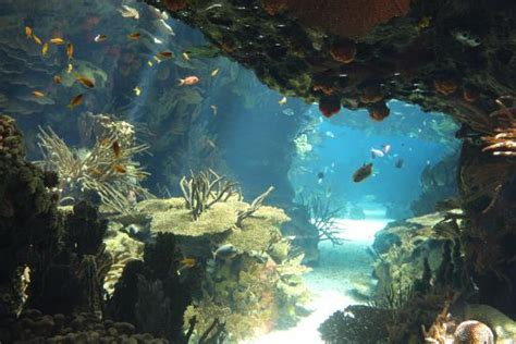 Oceanário de Lisboa   Picture of Lisbon Oceanarium, Lisbon ...