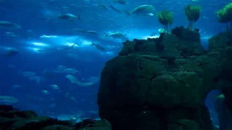 Oceanarium, Lisbon Aquarium, Portugal   YouTube