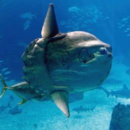 Oceanarium  Oceanario de Lisboa  Reviews | U.S. News Travel