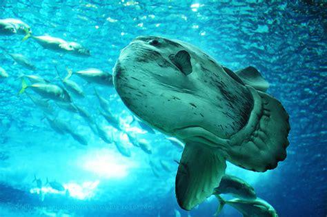 Oceanarium Parc Des Nations Lisbonne