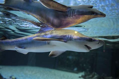 Oceanogràfic y Bioparc establecen servicios especiales ...
