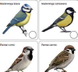 Ocells de Sarrià   Mapa Verd de Sarrià