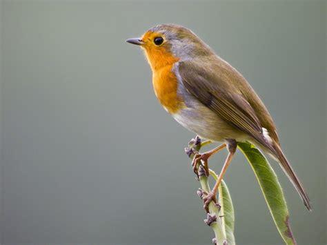 Ocells del Parc de la Serralada Litoral, Exposición ...