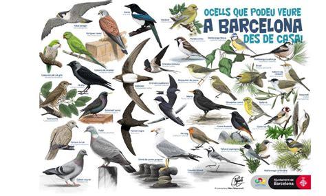 Ocells des de casa