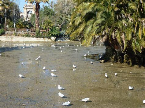 Ocells urbans de Barcelona