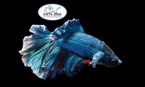Oferta – EMTE – Zoo