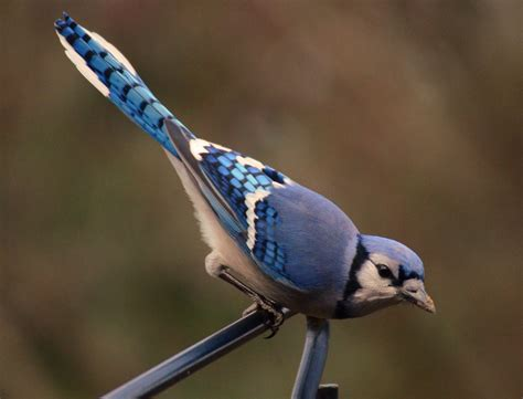 Ohio Birds and Biodiversity: Common Feeder Birds: The Rest ...