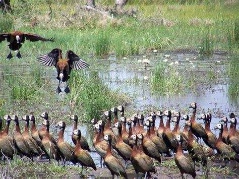 Okavango Delta | SPEAKZEASY