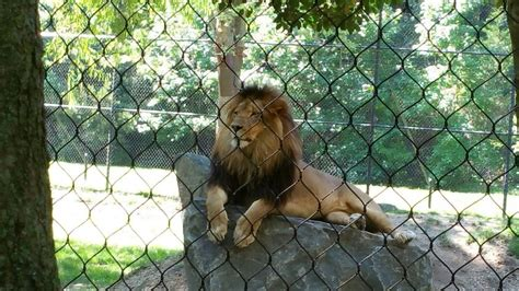 One Of The Best Zoos In The Nation Is Right Here In New ...