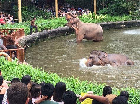One of the top three zoos in the world, made in Singapore