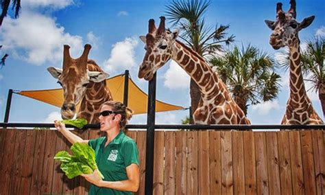 One Year Zoo Membership   Naples Zoo at Caribbean Gardens ...